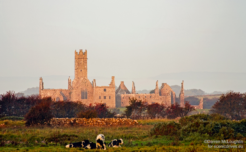 Cattle graze in front of Ross Errilly Friary, Galway